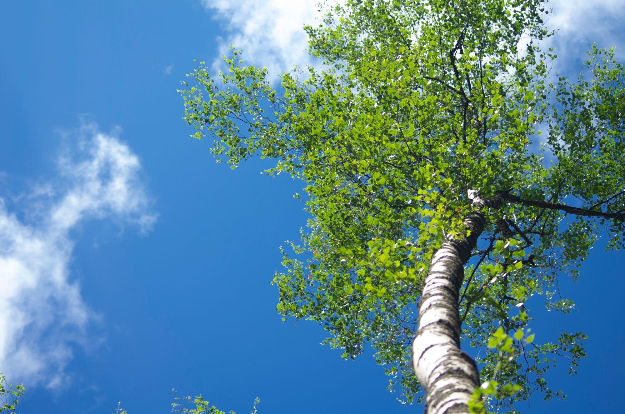 Kasvit tuottavat happea hiilidioksidin avulla