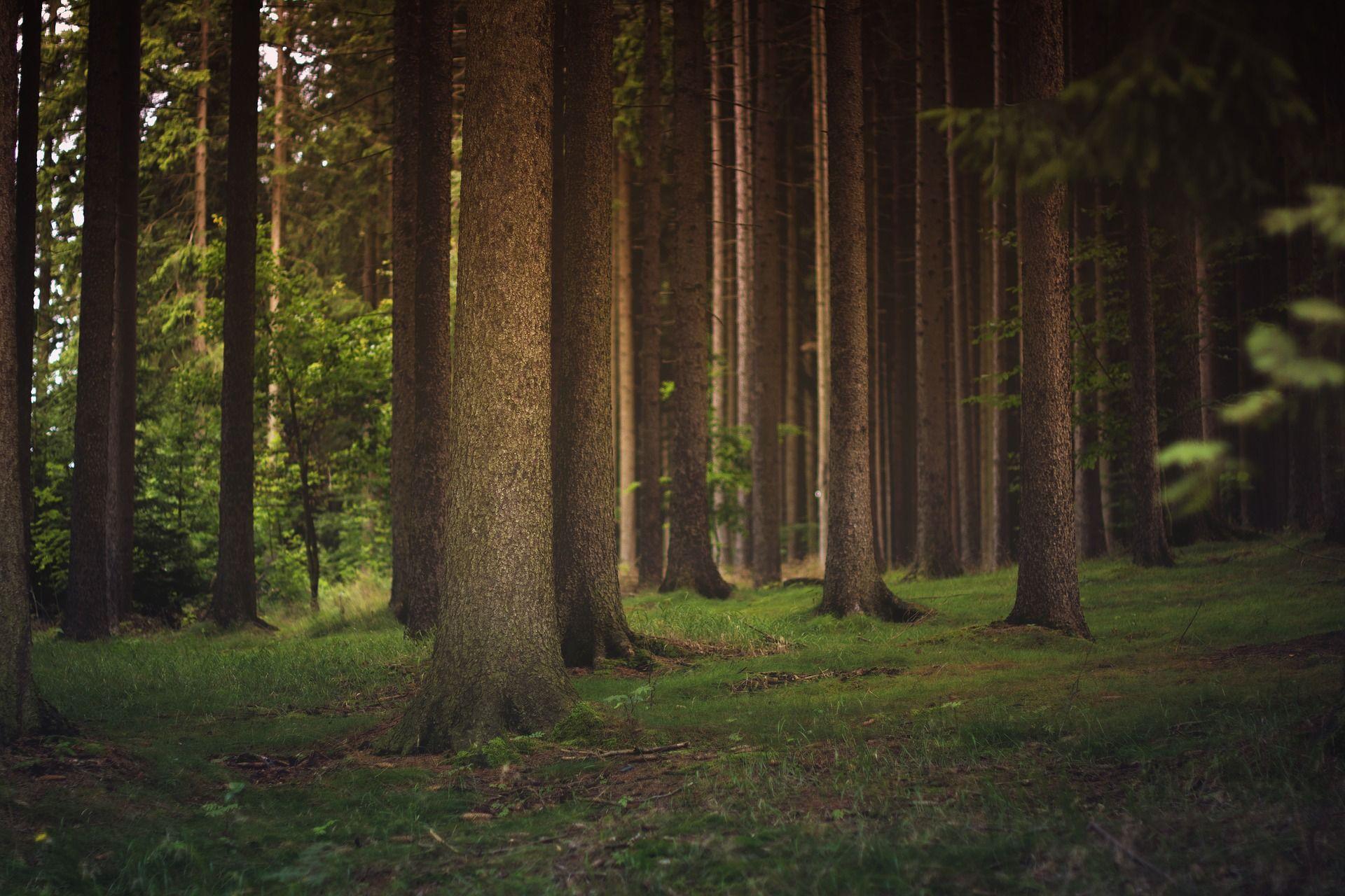 Metsämaisema joka rauhoittaa mieltä
