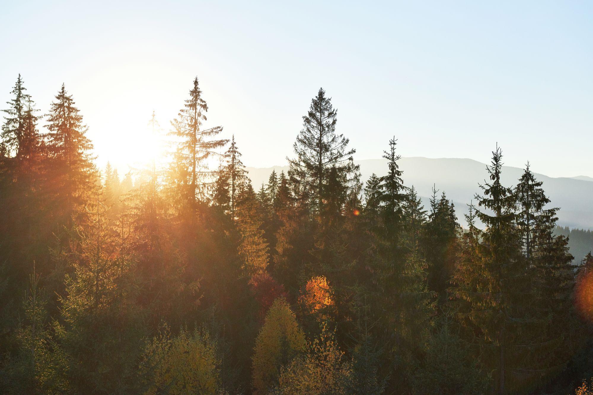 Syksyinen metsämaisema, jossa henki kulkee hyvin
