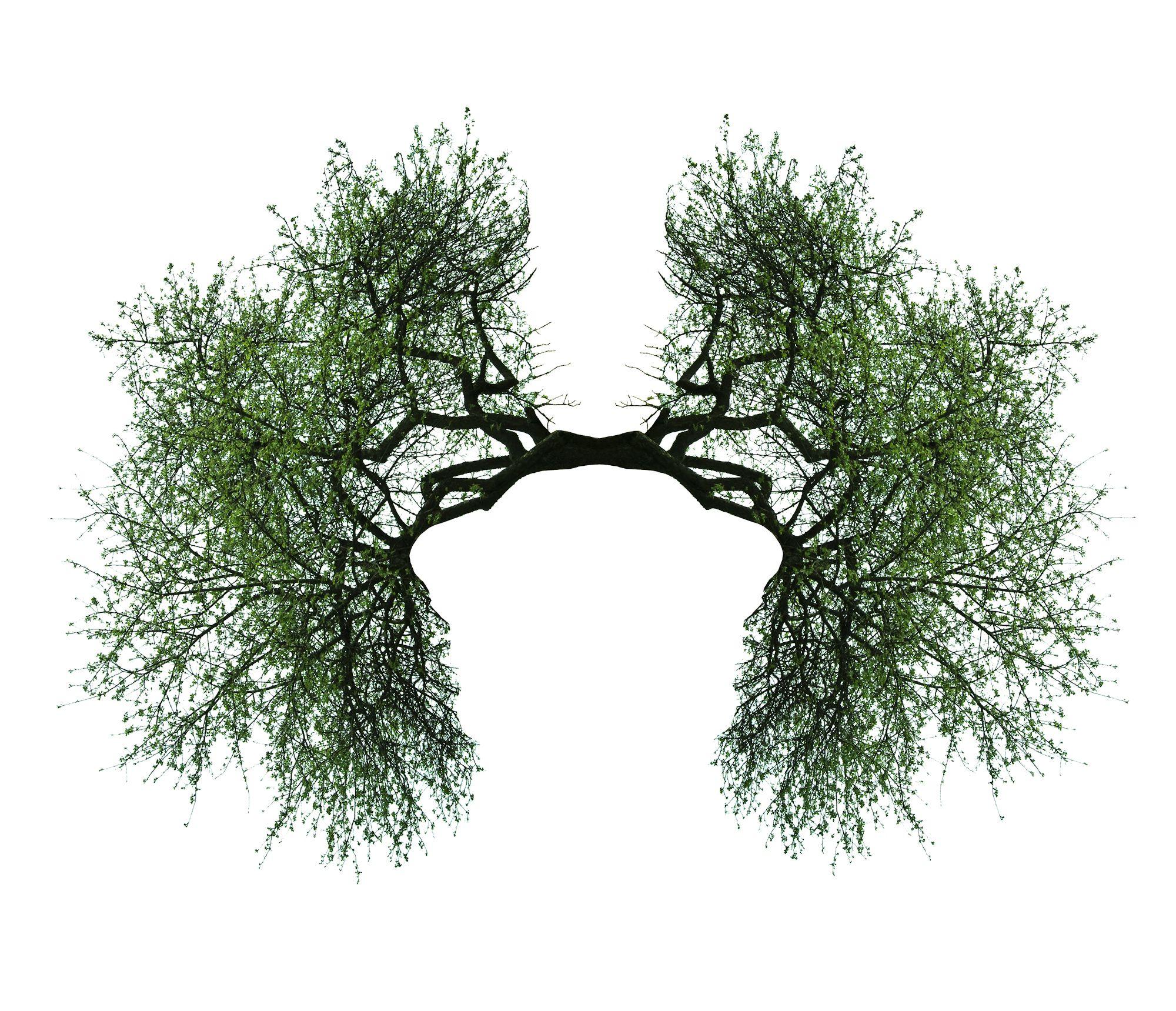 Keuhkot kuljettavat happea