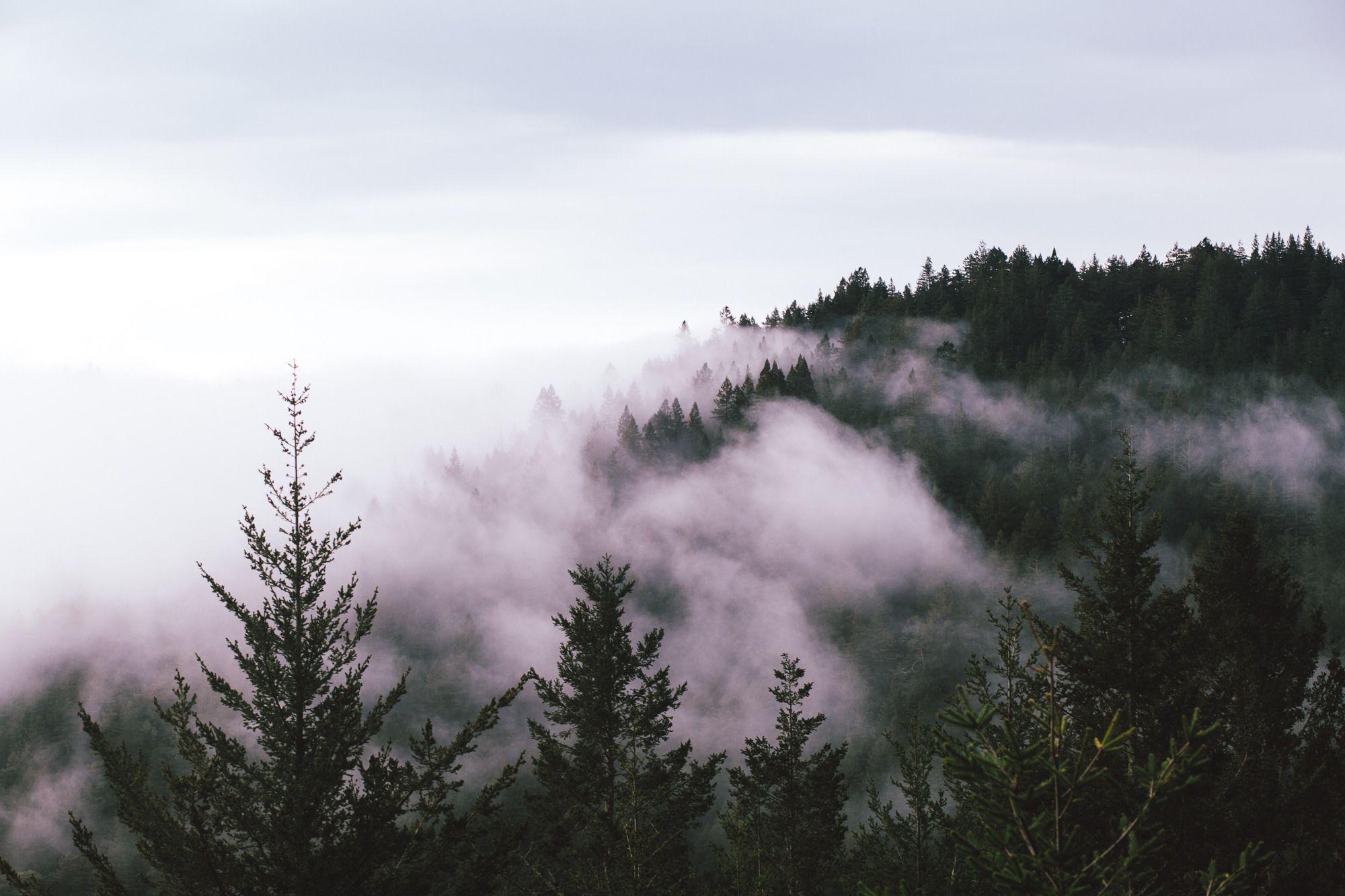 Sumuinen metsä, joka kuvastaa tupakansavua