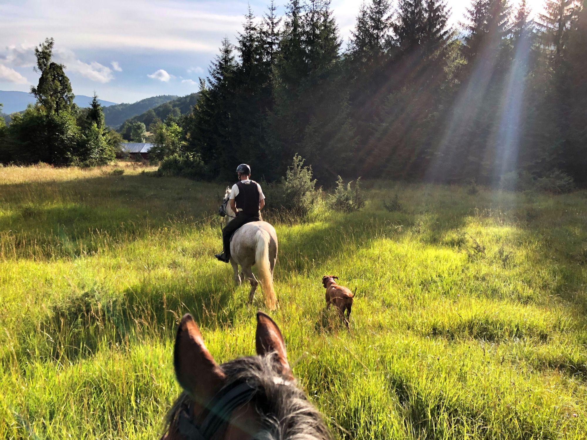 Mies ratsastaa hevosella metsässä
