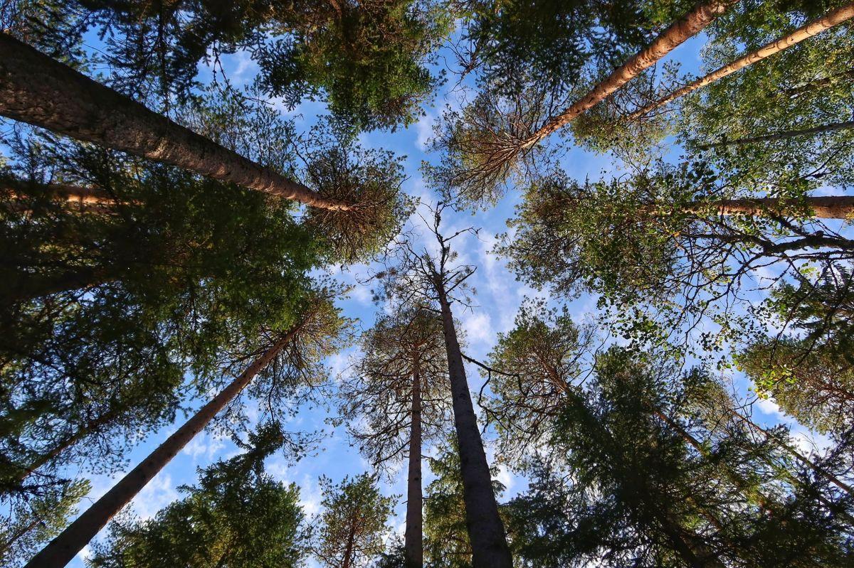 Hengitys on yksilöllinen asia, joka voi rauhoittua esimerkiksi metsässä