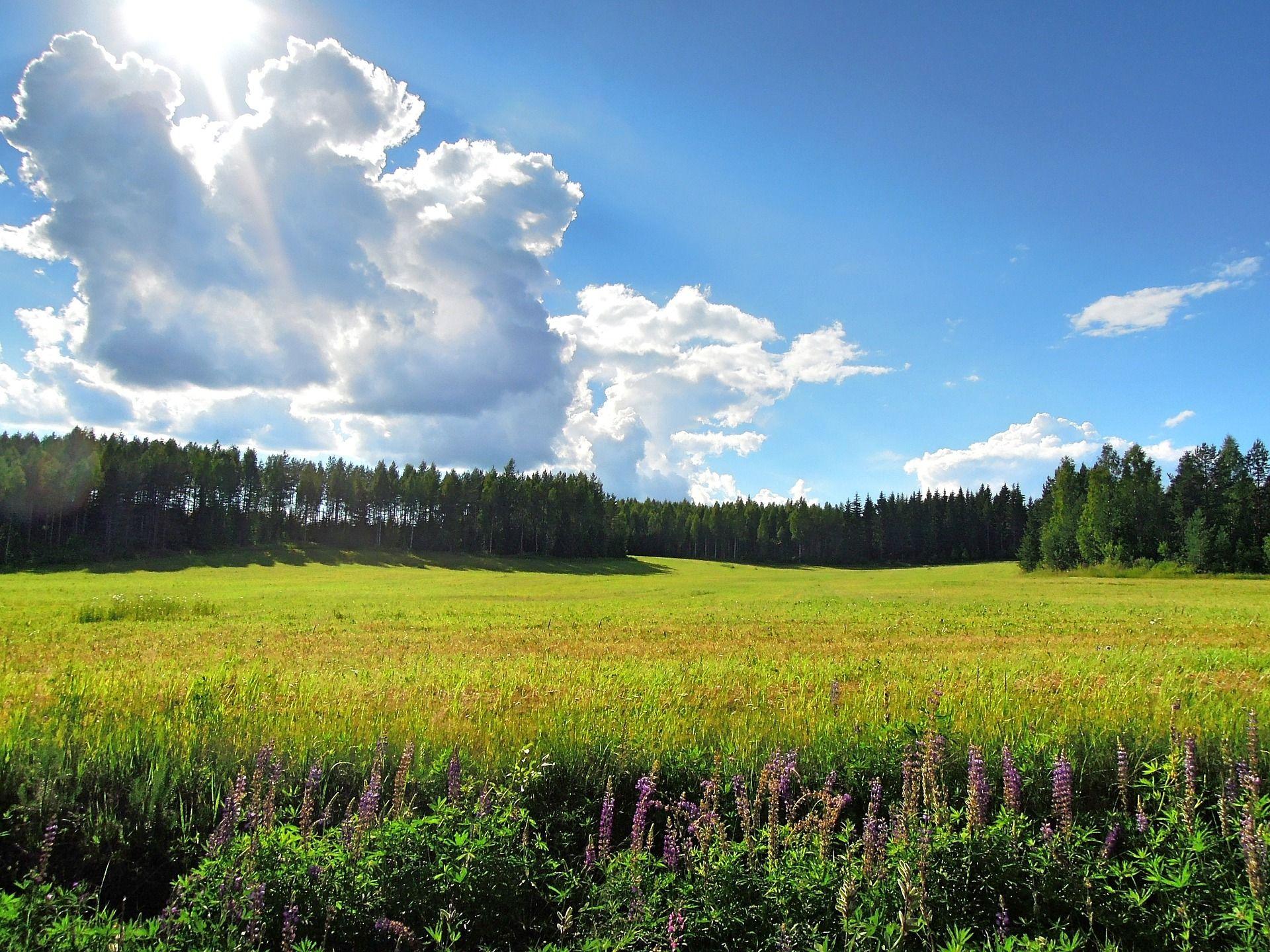 Suomalainen peltomaisema