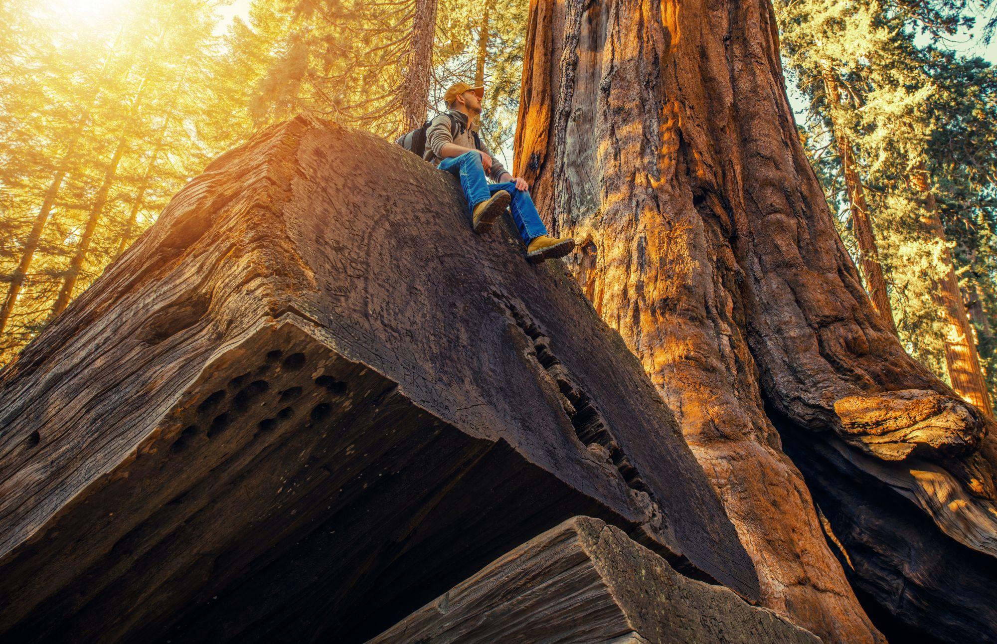 Mies hengittelee metsässä